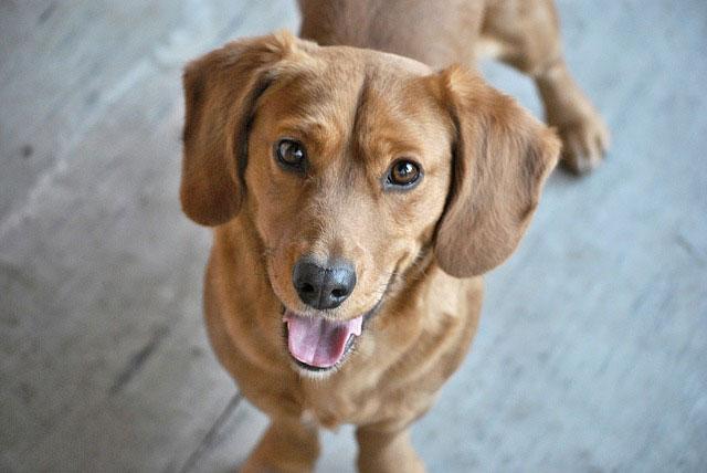 Dbasz o zdrowie i higienę swojego psa?